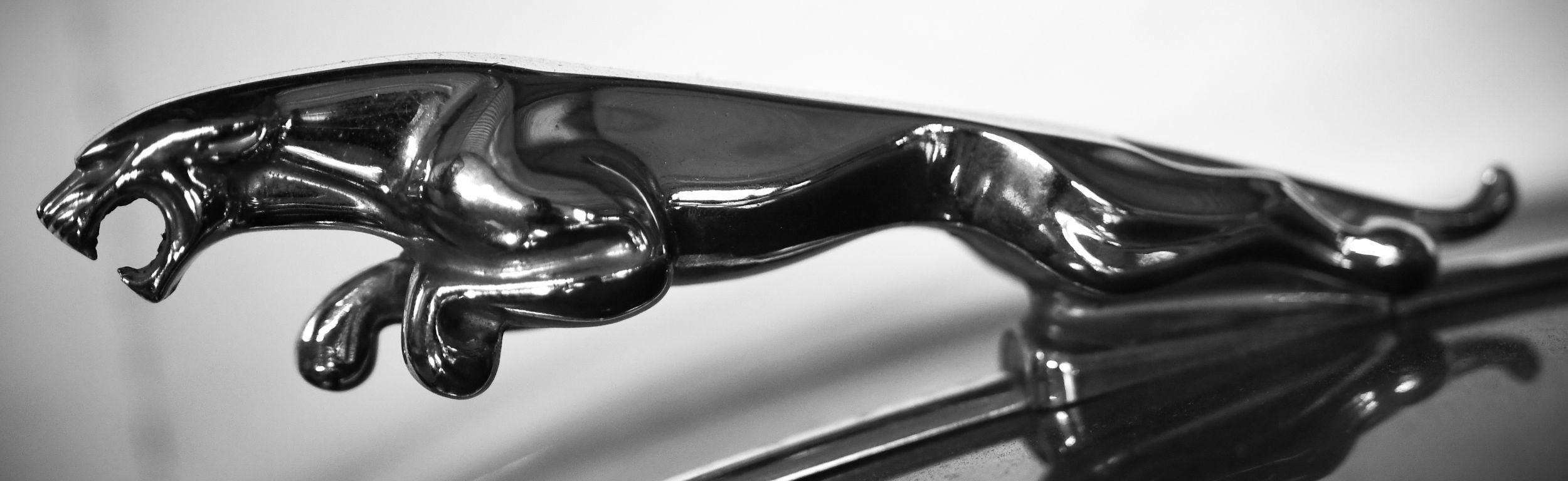 12_Jaguar